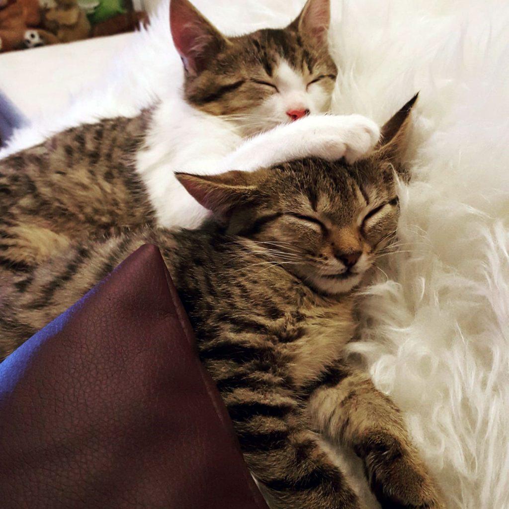 Katzenverhaltensberatung